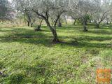 Koper Dekani 8 km od Kopra in morja Zazidljiva 2555 m2