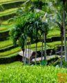 Letalske karte Denpasar/Bali za 629 EUR