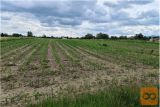 Kmetijska Zemljišča V Trnovljah Pri Celju